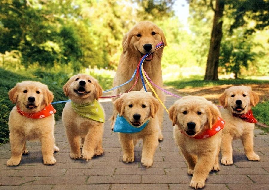 Separazione Dai Cuccioli Un Momento Difficile Per Ogni Mammifero