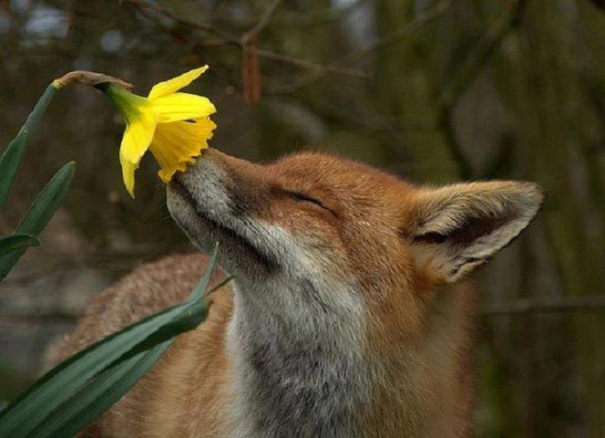fiori di Bach animali
