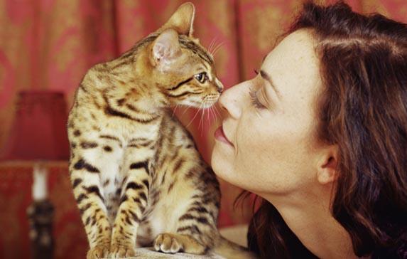 fiori di bach per gatti aggressivi