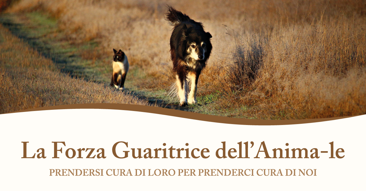 workshop la forza guaritrice dell'anima-le