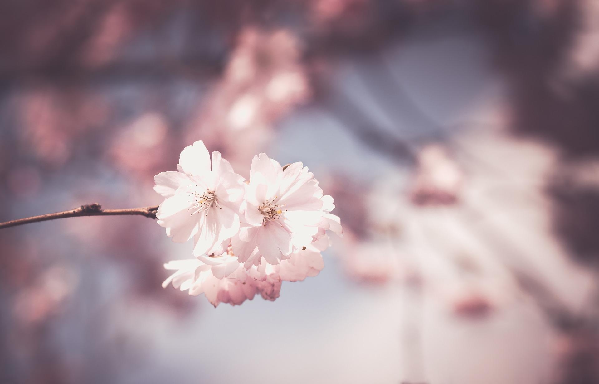 federica roano - fiori di bach