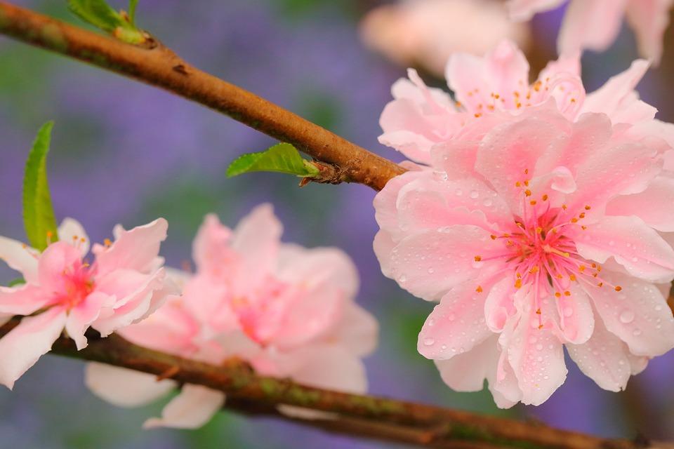 fiori di bach per persone
