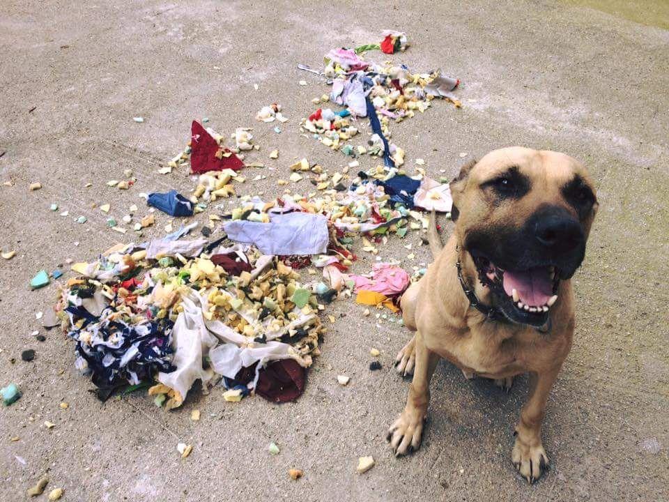Il Mio Cane Fa I Dispetti Quando Resta Solo Che Faccio